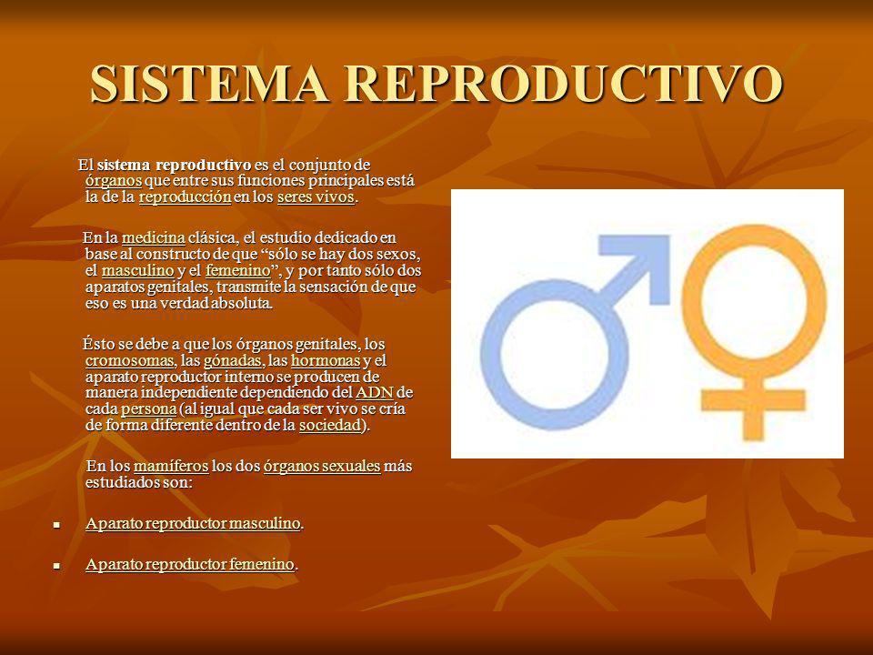 SISTEMA REPRODUCTIVO El sistema reproductivo es el conjunto de órganos que entre sus funciones principales está la de la reproducción en los seres vivos.