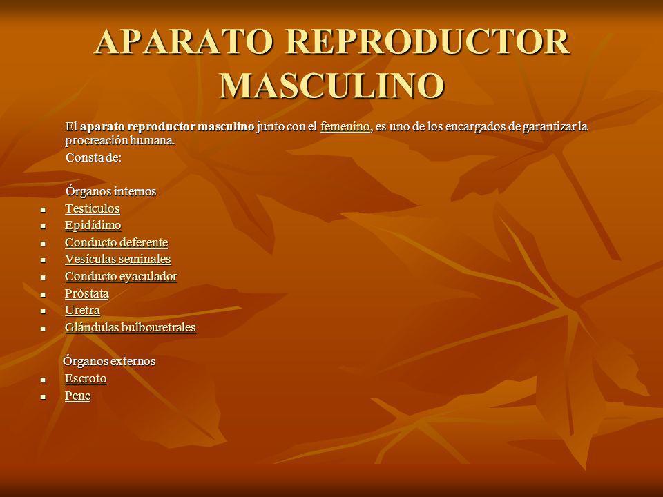 APARATO REPRODUCTOR MASCULINO El aparato reproductor masculino junto con el femenino, es uno de los encargados de garantizar la procreación humana.