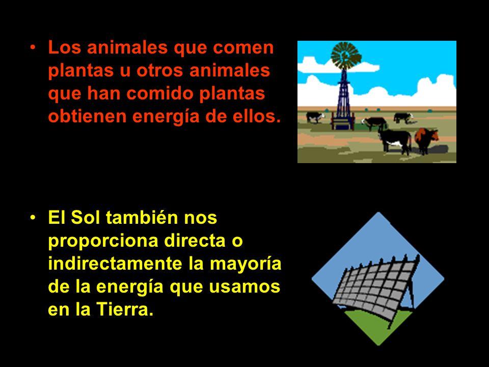 Los animales que comen plantas u otros animales que han comido plantas obtienen energía de ellos. El Sol también nos proporciona directa o indirectame