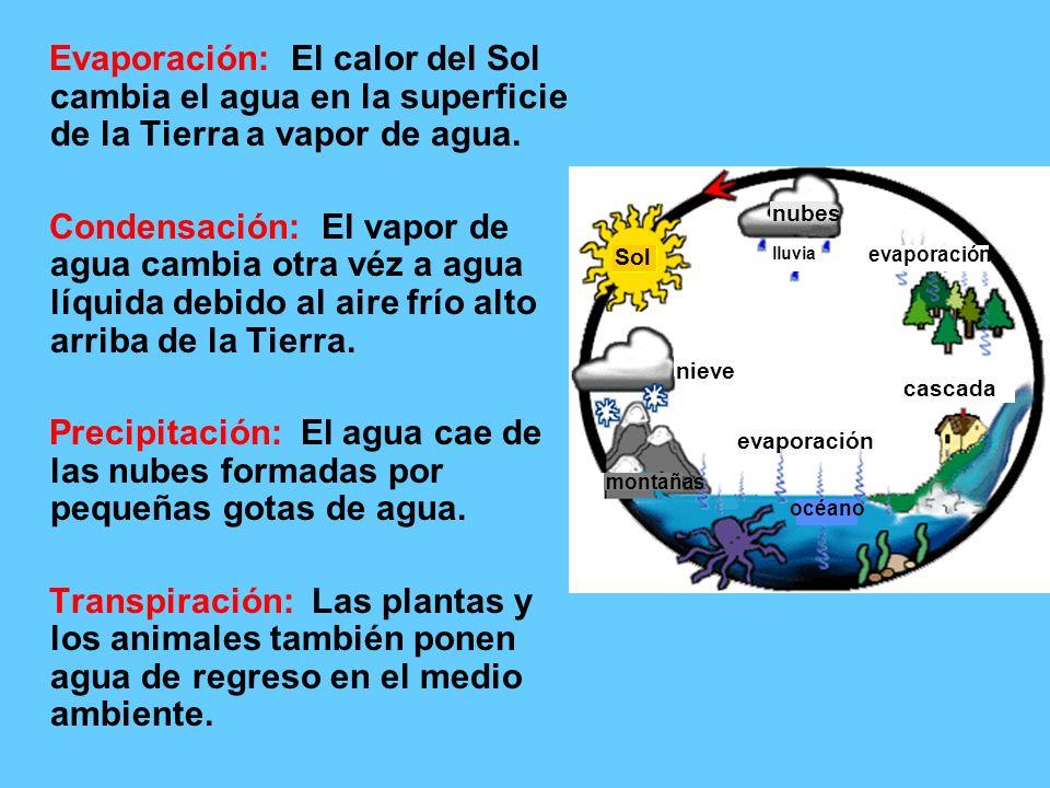Evaporación: El calor del Sol cambia el agua en la superficie de la Tierra a vapor de agua. Condensación: El vapor de agua cambia otra véz a agua líqu
