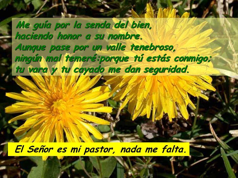 Salmo 22 El Señor es mi pastor, nada me falta. En prados de hierba fresca me hace reposar, me conduce junto a aguas tranquilas, y repone mis fuerzas.