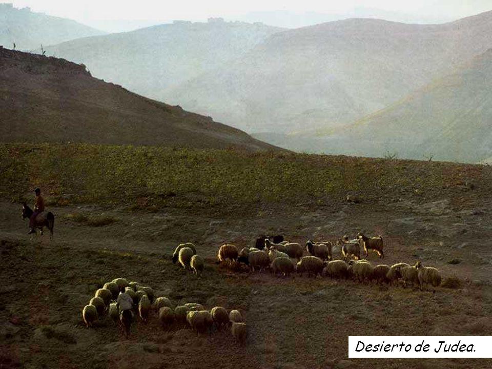 Aleluya Jn 10: 14 Yo soy el buen Pastor, dice el Señor, conozco a mis ovejas y las mías me conocen.