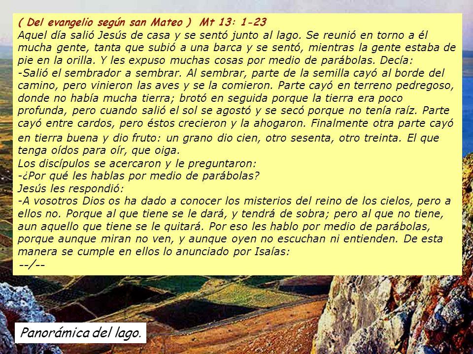 Aleluya La semilla es la palabra de Dios, Cristo es el sembrador. Quien lo encuentra vive para siempre. Aleluya La semilla es la palabra de Dios, Cris