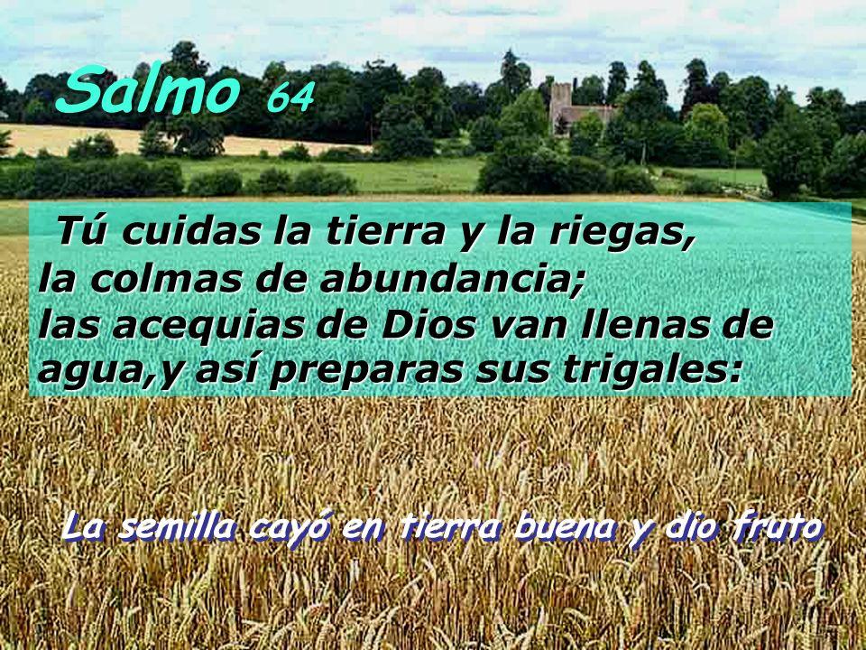 Salmo 64 Tú cuidas la tierra y la riegas, la colmas de abundancia; las acequias de Dios van llenas de agua,y así preparas sus trigales: La semilla cayó en tierra buena y dio fruto