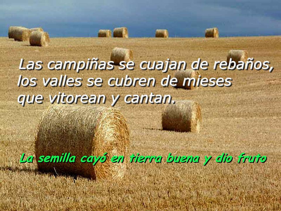 Tú coronas el año con tus bienes, de tus surcos mana la abundancia; rezuman los pastos del desierto, los collados se llenan de alegría; La semilla cay