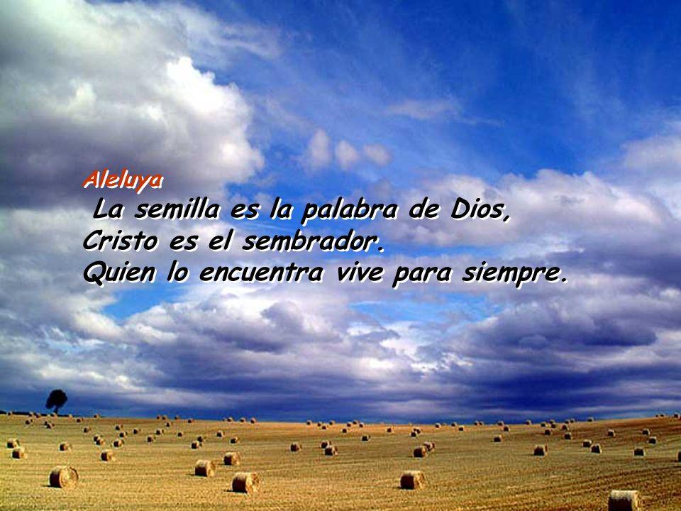 Aleluya La semilla es la palabra de Dios, Cristo es el sembrador.