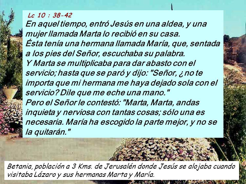 ALELUYA Lc 8 : 15 Felices los que escuchan la palabra con corazón puro, la retienen y dan fruto con perseverancia. la retienen y dan fruto con perseve
