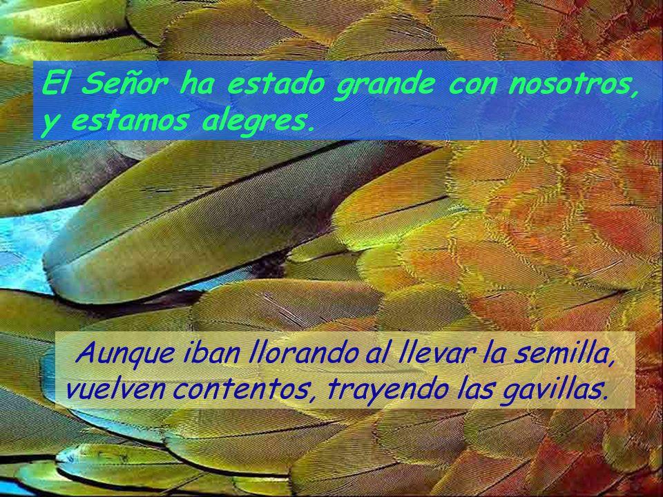 ¡Cambia, Señor, nuestra suerte como cambian los torrentes del Négueb! Los que sembraban con lágrimas, cosechan entre canciones. El Señor ha estado gra