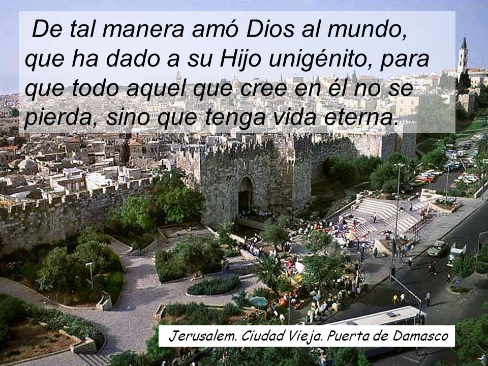 Señor, Tú tienes palabras de vida eterna. Señor, Tú tienes palabras de vida eterna.