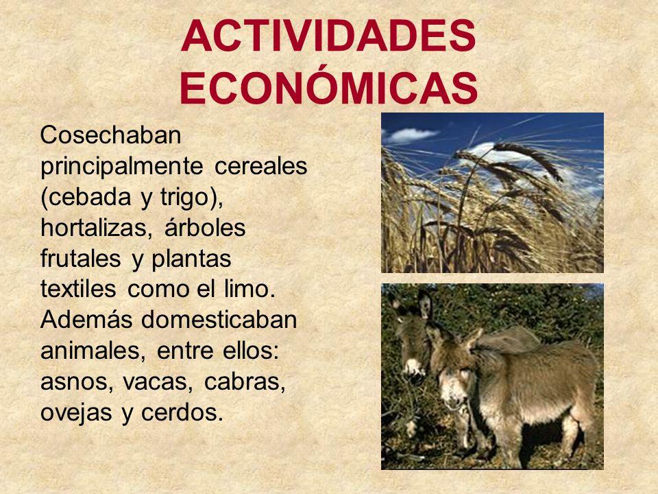 ACTIVIDADES ECONÓMICAS Cosechaban principalmente cereales (cebada y trigo), hortalizas, árboles frutales y plantas textiles como el limo. Además domes