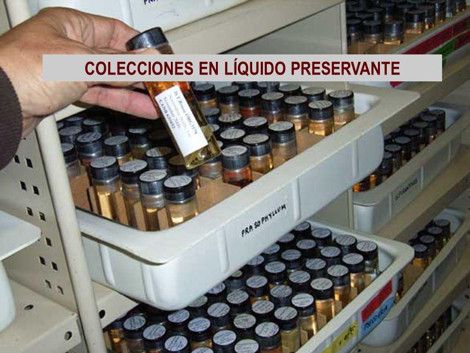 COLECCIONES EN LÍQUIDO PRESERVANTE