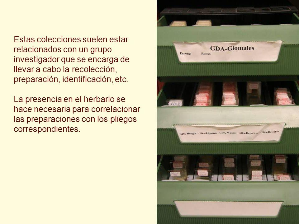 Estas colecciones suelen estar relacionados con un grupo investigador que se encarga de llevar a cabo la recolección, preparación, identificación, etc