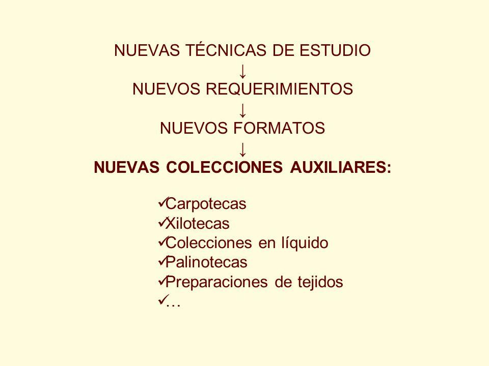 NUEVAS TÉCNICAS DE ESTUDIO NUEVOS REQUERIMIENTOS NUEVOS FORMATOS NUEVAS COLECCIONES AUXILIARES: Carpotecas Xilotecas Colecciones en líquido Palinoteca