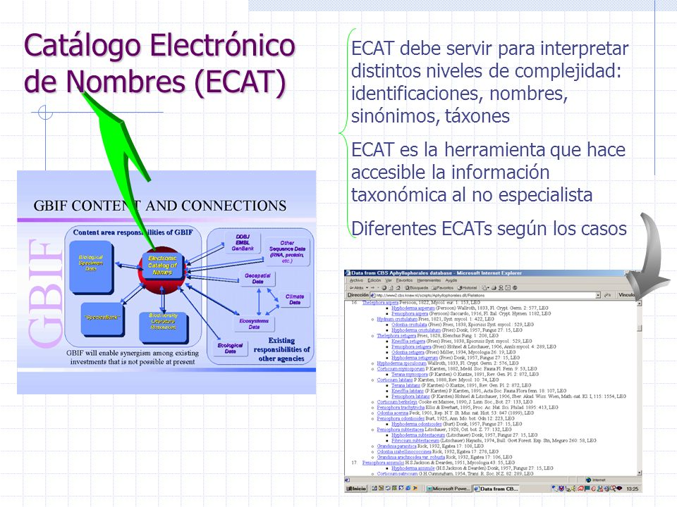 ECAT debe servir para interpretar distintos niveles de complejidad: identificaciones, nombres, sinónimos, táxones ECAT es la herramienta que hace accesible la información taxonómica al no especialista Diferentes ECATs según los casos Catálogo Electrónico de Nombres (ECAT)