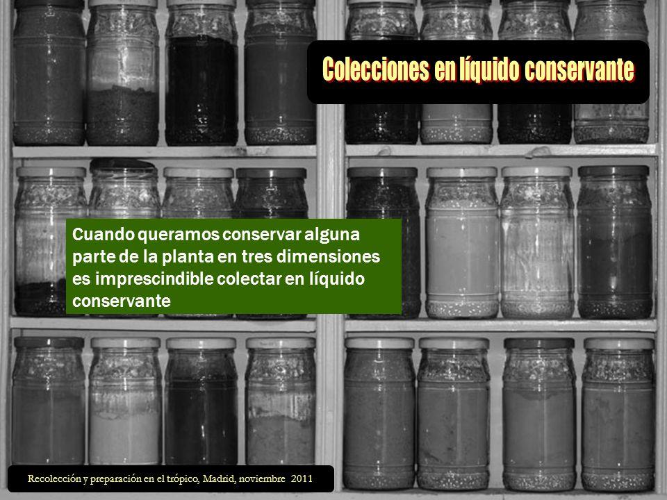 Cuando queramos conservar alguna parte de la planta en tres dimensiones es imprescindible colectar en líquido conservante Recolección y preparación en