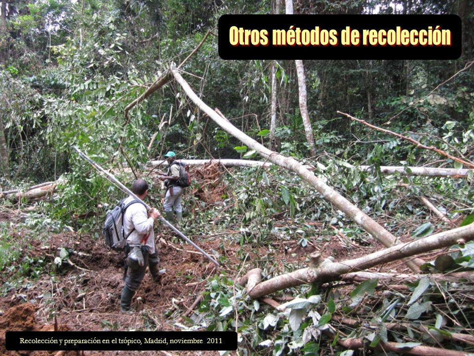 Existen otros métodos menos conocidos..…….. El tirachinas y la cadena El rifle La trepa al árbol Los monos amaestrados Las extracciones de madera