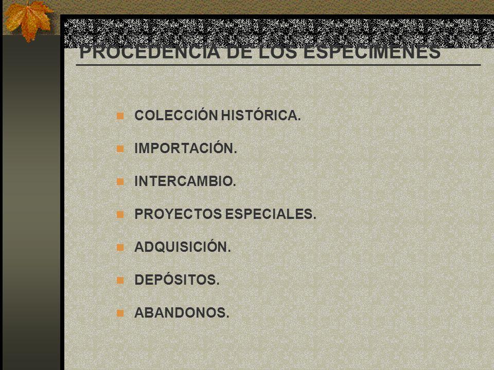 PROCEDENCIA DE LOS ESPECIMENES COLECCIÓN HISTÓRICA. IMPORTACIÓN. INTERCAMBIO. PROYECTOS ESPECIALES. ADQUISICIÓN. DEPÓSITOS. ABANDONOS.
