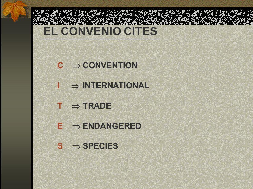 C CONVENTION I INTERNATIONAL T TRADE E ENDANGERED S SPECIES EL CONVENIO CITES
