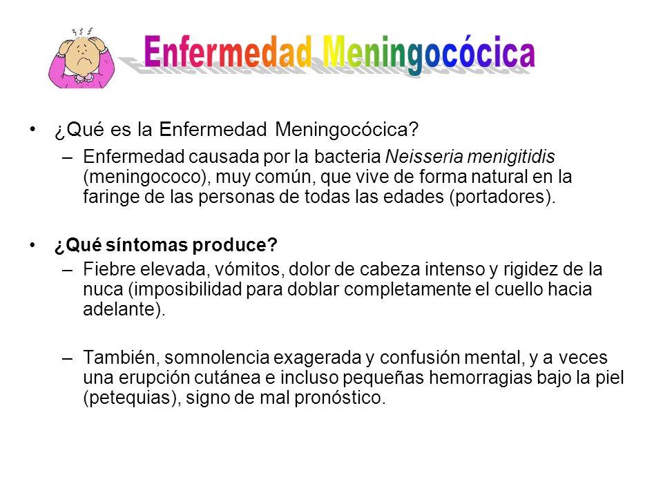 ¿Qué es la Enfermedad Meningocócica? –Enfermedad causada por la bacteria Neisseria menigitidis (meningococo), muy común, que vive de forma natural en