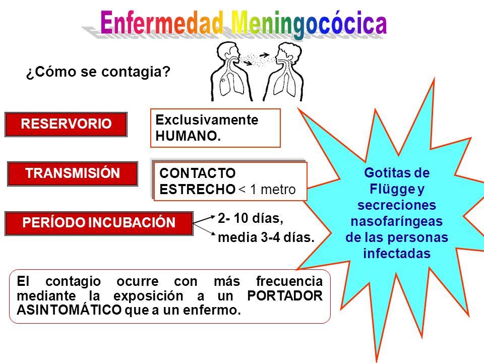El contagio ocurre con más frecuencia mediante la exposición a un PORTADOR ASINTOMÁTICO que a un enfermo. Gotitas de Flügge y secreciones nasofaríngea