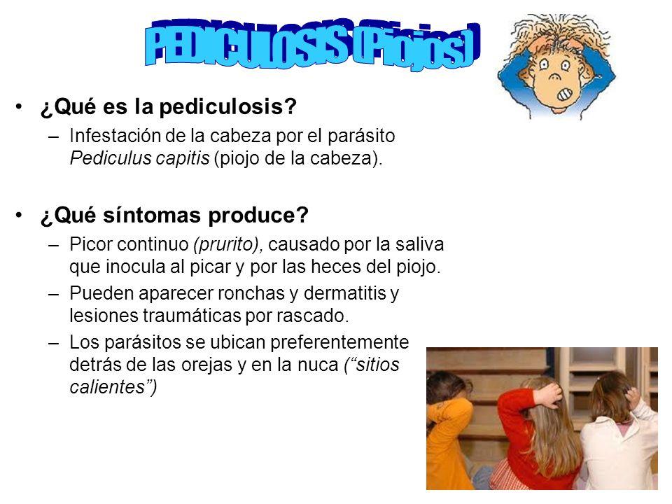 ¿Qué es la pediculosis? –Infestación de la cabeza por el parásito Pediculus capitis (piojo de la cabeza). ¿Qué síntomas produce? –Picor continuo (prur