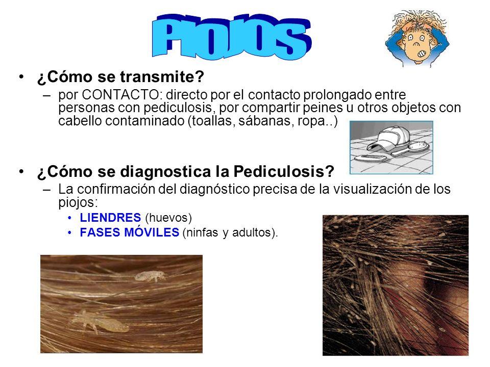 ¿Cómo se transmite? –por CONTACTO: directo por el contacto prolongado entre personas con pediculosis, por compartir peines u otros objetos con cabello