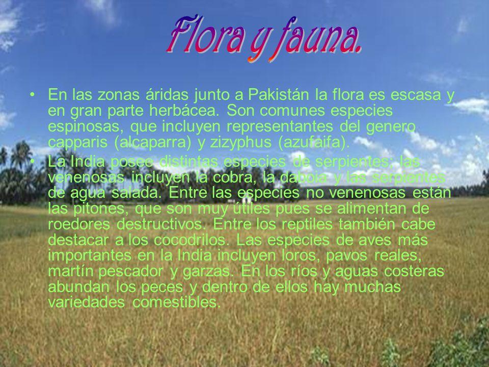 En las zonas áridas junto a Pakistán la flora es escasa y en gran parte herbácea. Son comunes especies espinosas, que incluyen representantes del gene