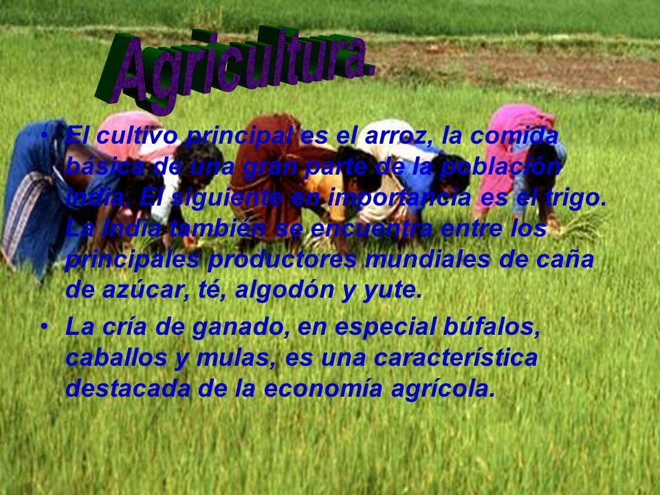 El cultivo principal es el arroz, la comida básica de una gran parte de la población india. El siguiente en importancia es el trigo. La India también