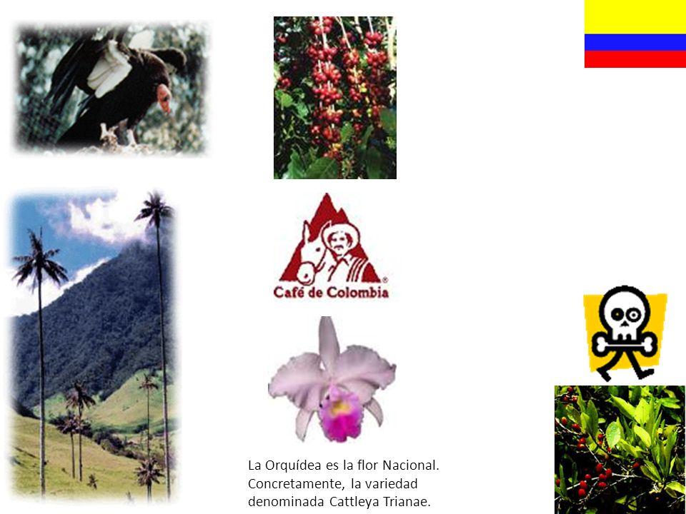 La Orquídea es la flor Nacional. Concretamente, la variedad denominada Cattleya Trianae.