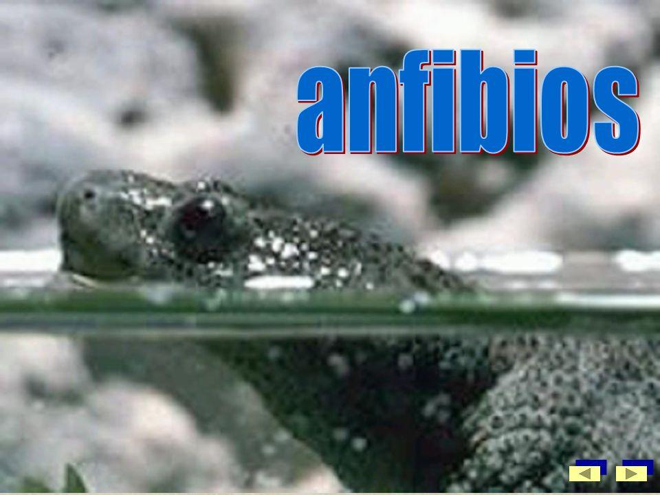 Reptileslas serpientes, los lagartos, las lagartijas, las tortugas y los cocodrilos son reptiles.