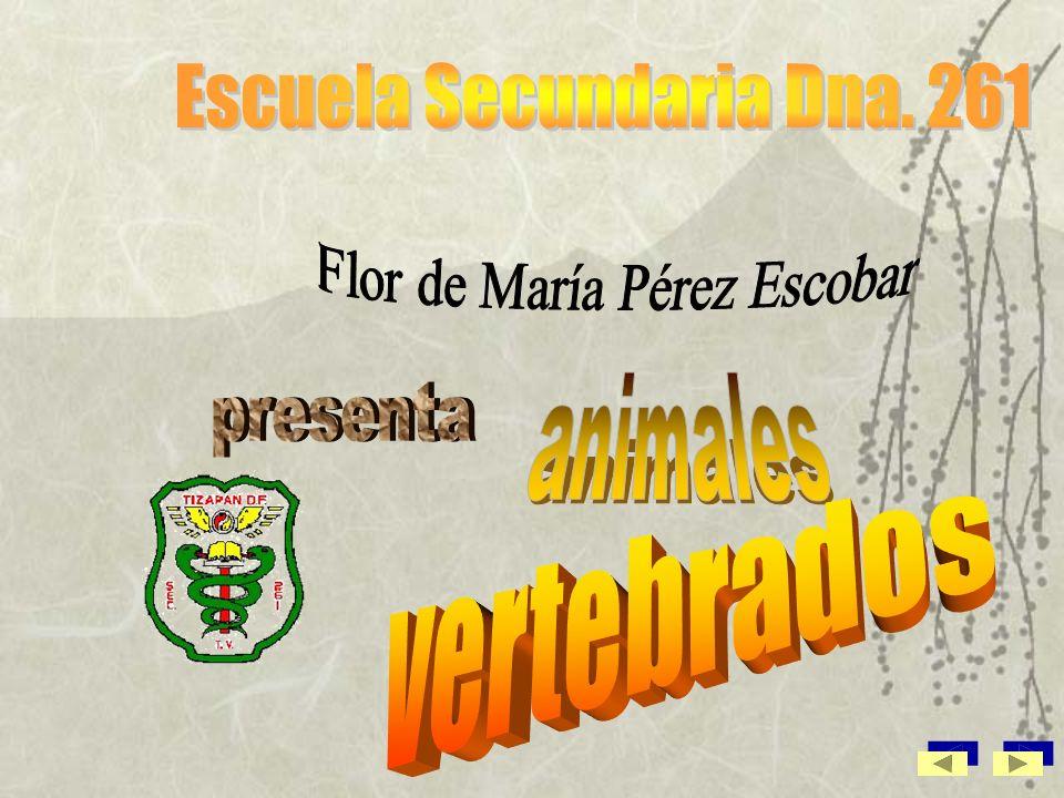 Animales vertebrados Civismo Don Quijote El enunciado Profra. Flor de María Pérez Escobar