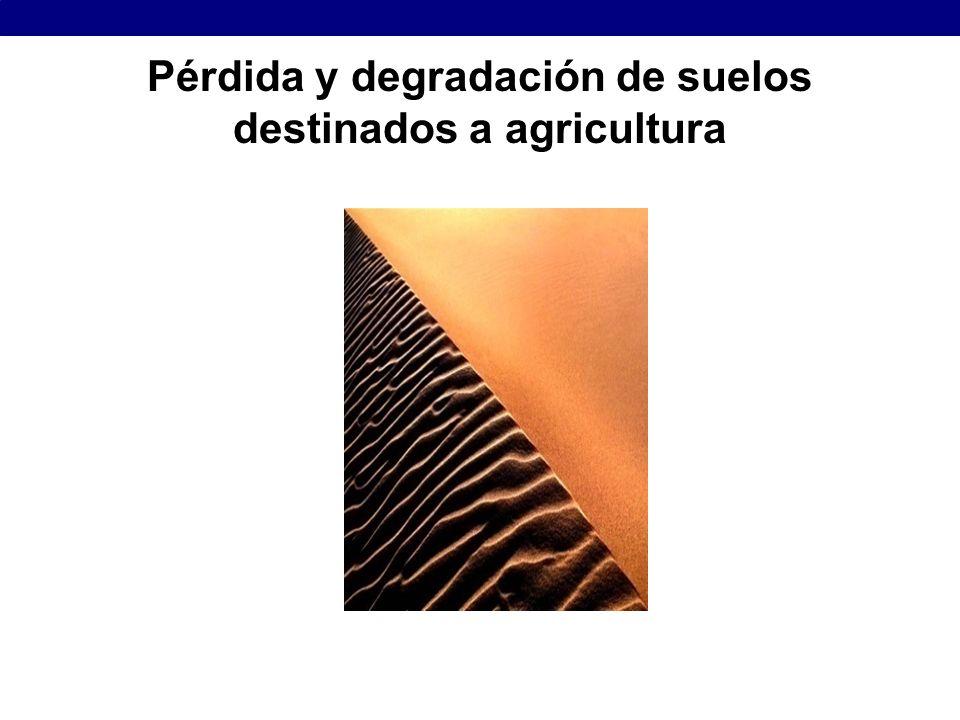 Pérdida y degradación de suelos destinados a agricultura