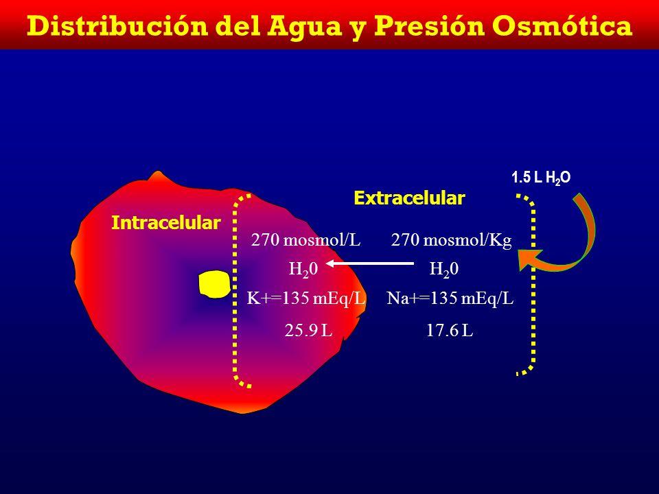 Distribución del Agua y Presión Osmótica Intracelular Extracelular 290 mosmol/Kg H20H20 K+=145 mEq/L 24.1 L 290 mosmol/Kg H20H20 Na+=145 mEq/L 17.9 L