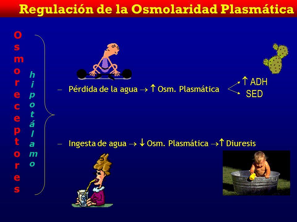 Concentración del Na + Plasmático y Osmolaridad Plasmática Posm = 2 x Na plasma + + = mosmol/Kg Posm= 2 X Na plasma (glucosa + N de U = < 10 mosmol/Kg