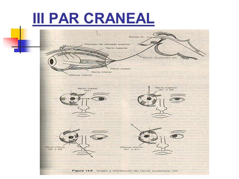 III PAR CRANEAL