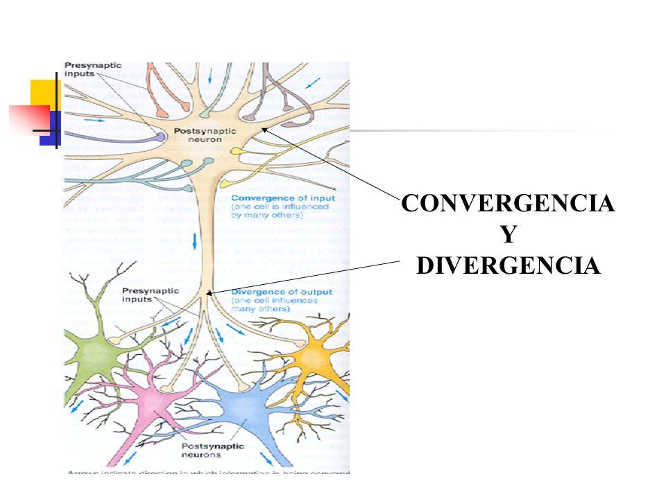 CONVERGENCIA Y DIVERGENCIA
