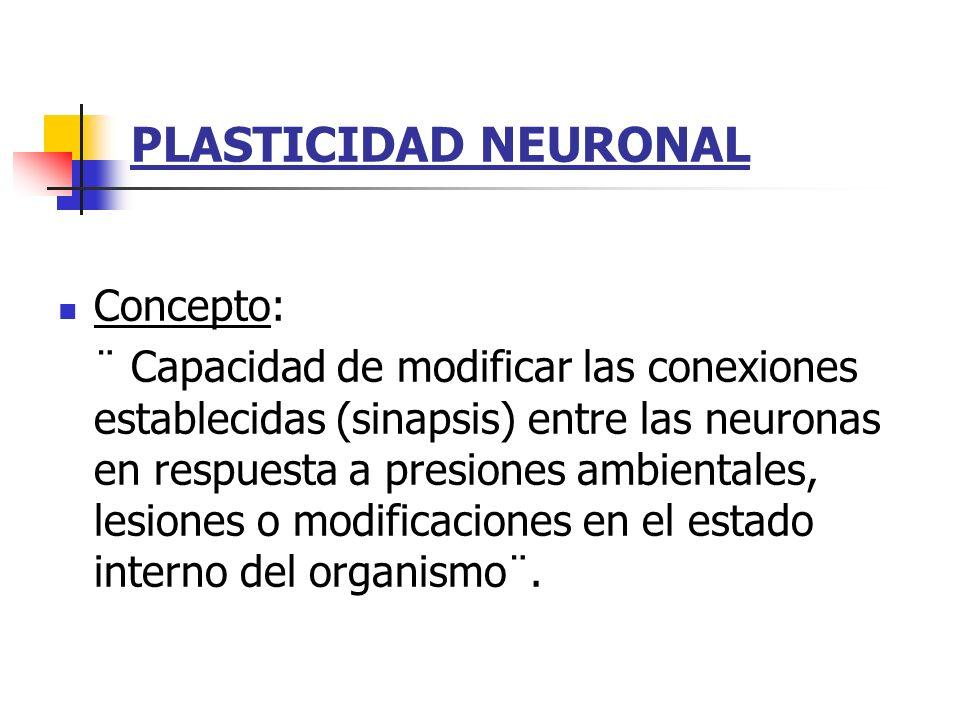 PLASTICIDAD NEURONAL Concepto: ¨ Capacidad de modificar las conexiones establecidas (sinapsis) entre las neuronas en respuesta a presiones ambientales