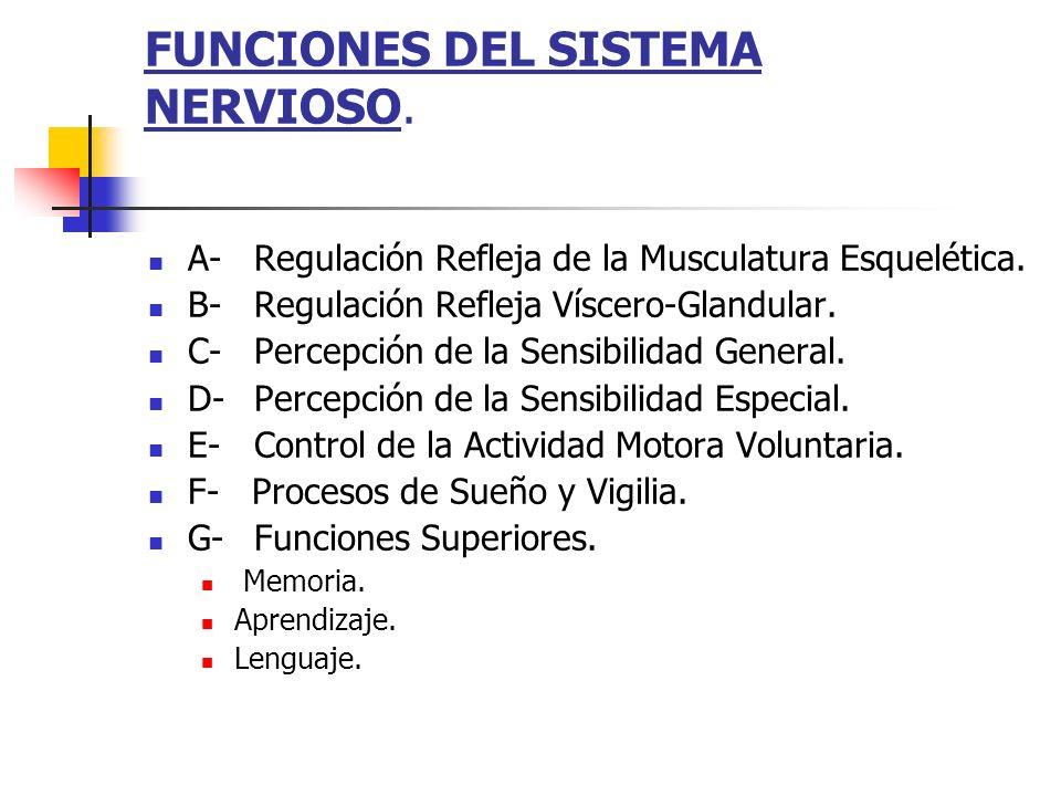FUNCIONES DEL SISTEMA NERVIOSO. A-Regulación Refleja de la Musculatura Esquelética. B-Regulación Refleja Víscero-Glandular. C-Percepción de la Sensibi