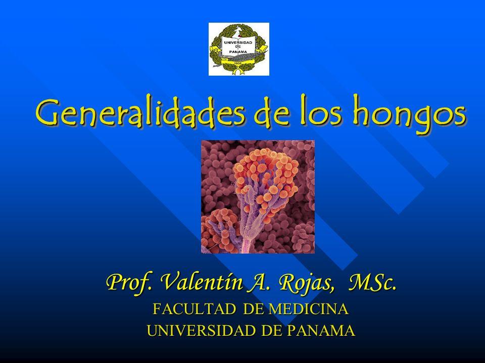 Generalidades de los hongos Prof.Valentín A. Rojas, MSc.