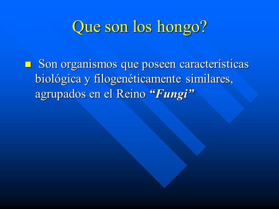 Son organismos que poseen características biológica y filogenéticamente similares, agrupados en el Reino Fungi Son organismos que poseen características biológica y filogenéticamente similares, agrupados en el Reino Fungi