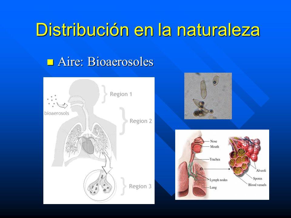 Distribución en la naturaleza Aire: Bioaerosoles Aire: Bioaerosoles