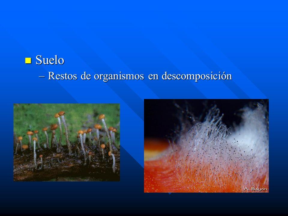 Medios de cultivos Sabouraud Sabouraud »Glucosa, peptona.
