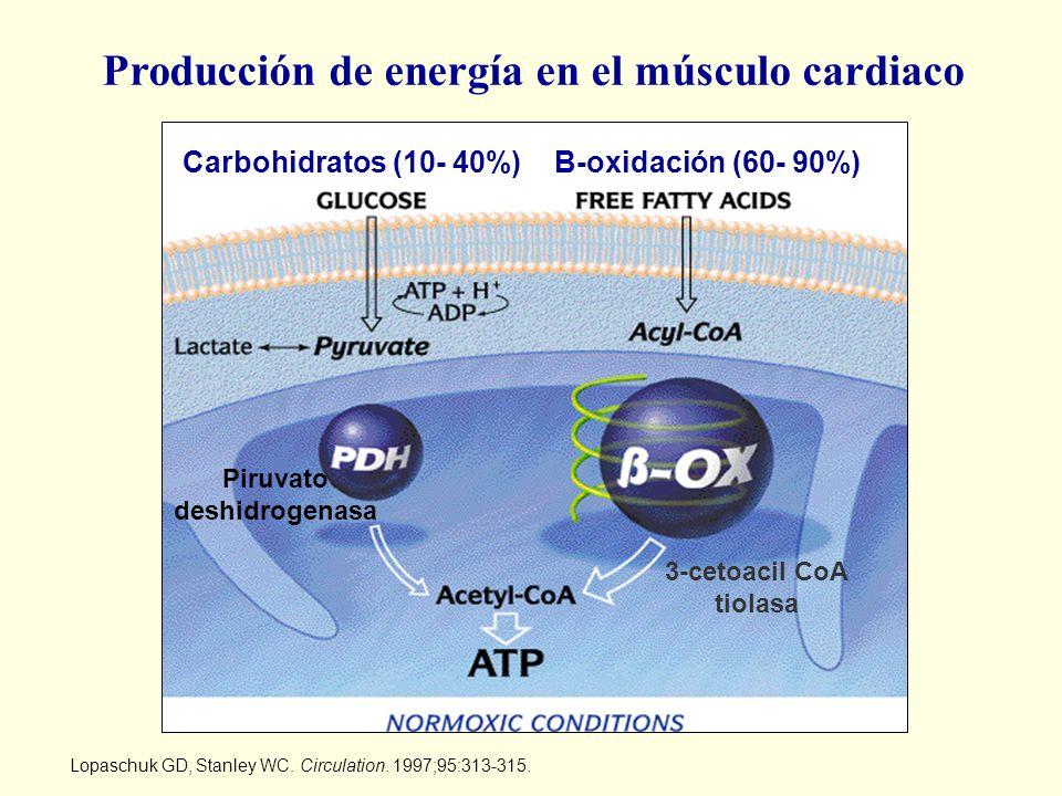 Lopaschuk GD, Stanley WC. Circulation. 1997;95:313-315. Producción de energía en el músculo cardiaco Carbohidratos (10- 40%)B-oxidación (60- 90%) Piru
