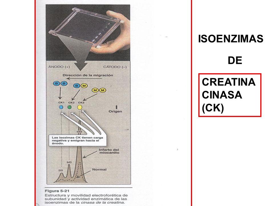 ISOENZIMAS DE CREATINA CINASA (CK)