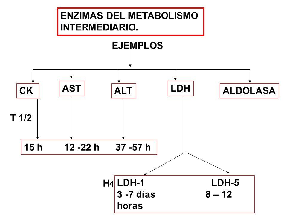 ENZIMAS DEL METABOLISMO INTERMEDIARIO. CK AST ALT LDH ALDOLASA EJEMPLOS T 1/2 15 h 12 -22 h 37 -57 h LDH-1 LDH-5 3 -7 días 8 – 12 horas H4H4