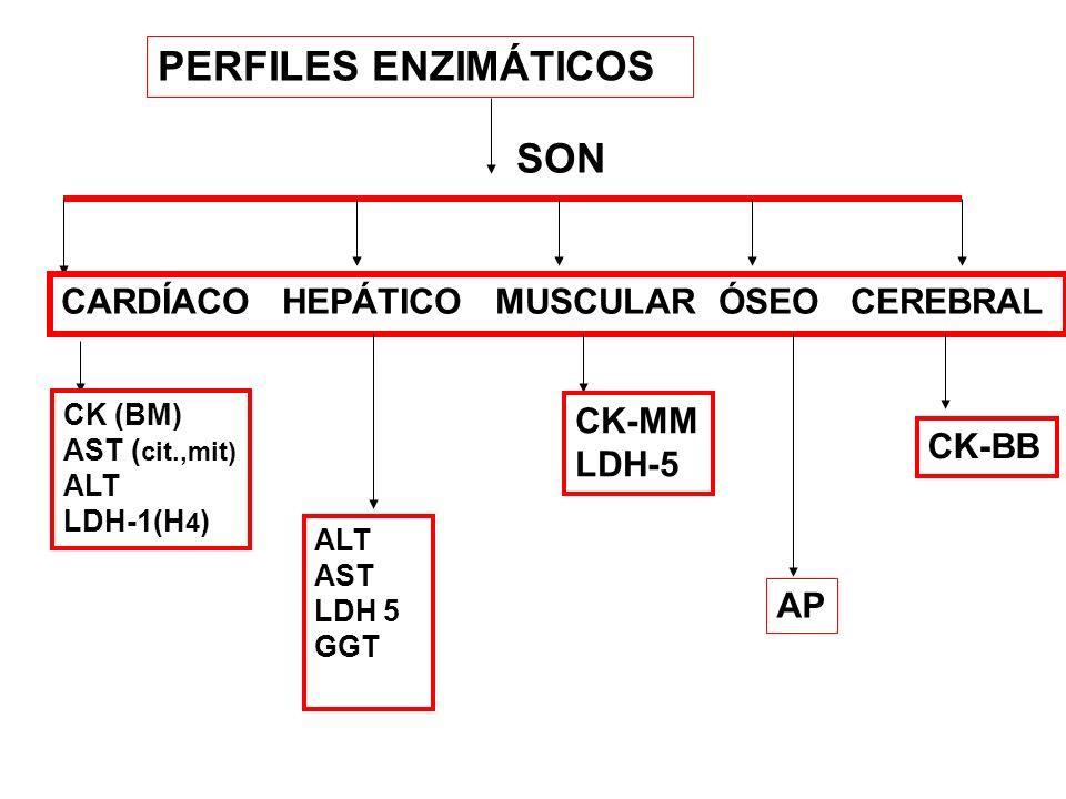 ACTIVIDAD RELATIVA DE LACTATO DH TEJIDOS ÓRGANO LDH-1LDH-2LDH-3LDH-4LDH-5 H 4 H 3 MH2M2H2M2 HM 3 M4M4 CORAZÓN 60 33 7 < 1 G.ROJOS 42 44 10 4 <1 MUSC.