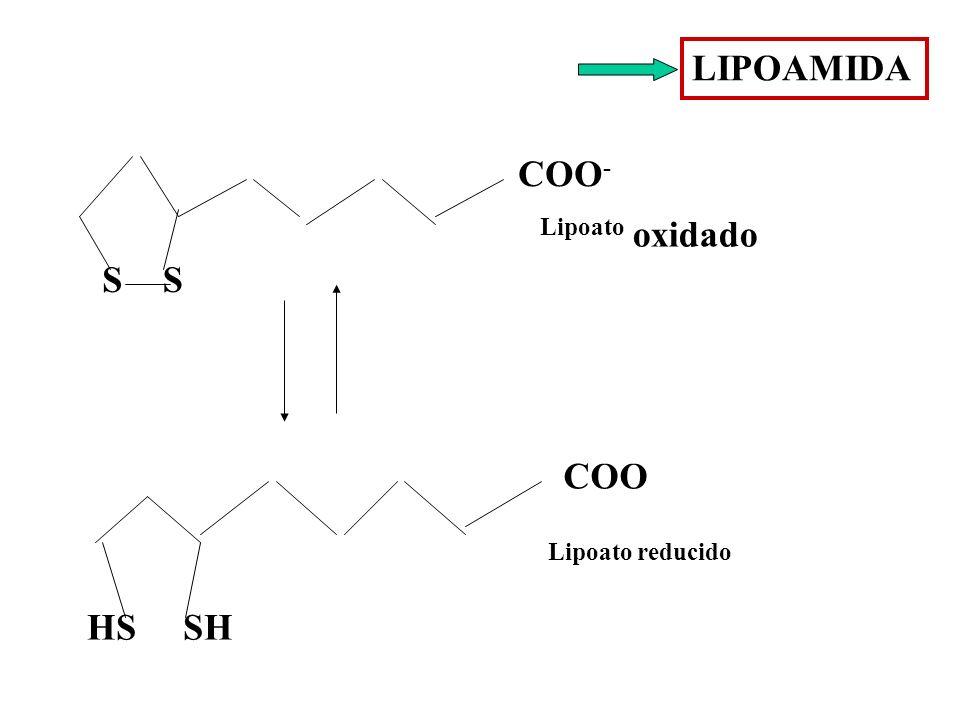 LIPOAMIDA SS COO - HS SH COO Lipoato oxidado Lipoato reducido