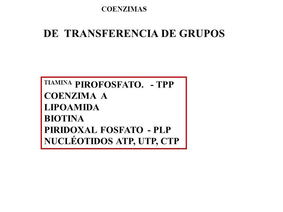 DE TRANSFERENCIA DE GRUPOS COENZIMAS TIAMINA PIROFOSFATO. - TPP COENZIMA A LIPOAMIDA BIOTINA PIRIDOXAL FOSFATO - PLP NUCLÉOTIDOS ATP, UTP, CTP