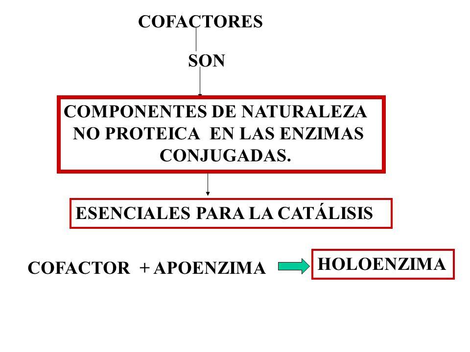 COFACTORES SON COMPONENTES DE NATURALEZA NO PROTEICA EN LAS ENZIMAS CONJUGADAS. ESENCIALES PARA LA CATÁLISIS COFACTOR + APOENZIMA HOLOENZIMA