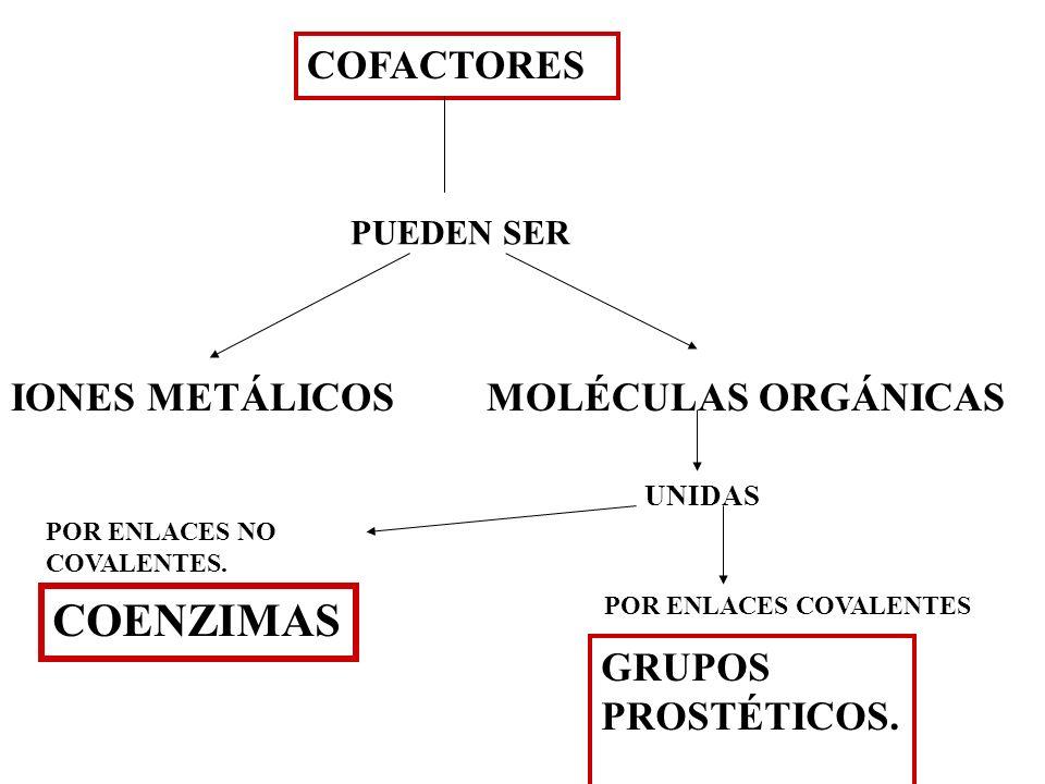 COFACTORES PUEDEN SER IONES METÁLICOS MOLÉCULAS ORGÁNICAS UNIDAS POR ENLACES COVALENTES POR ENLACES NO COVALENTES. COENZIMAS GRUPOS PROSTÉTICOS.